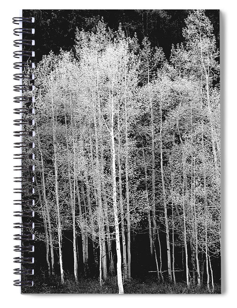 Outdoors Spiral Notebook featuring the photograph Grove Of Aspen Trees Populus by David Epperson