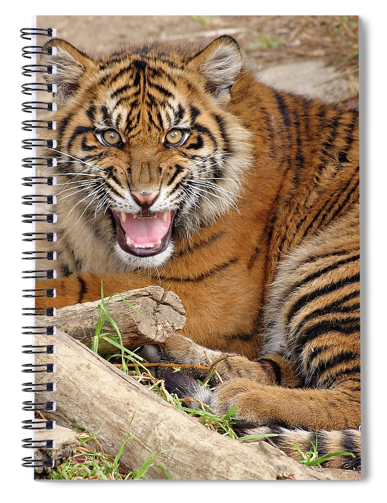 Snarling Spiral Notebook featuring the photograph Growling Tiger by S. Greg Panosian