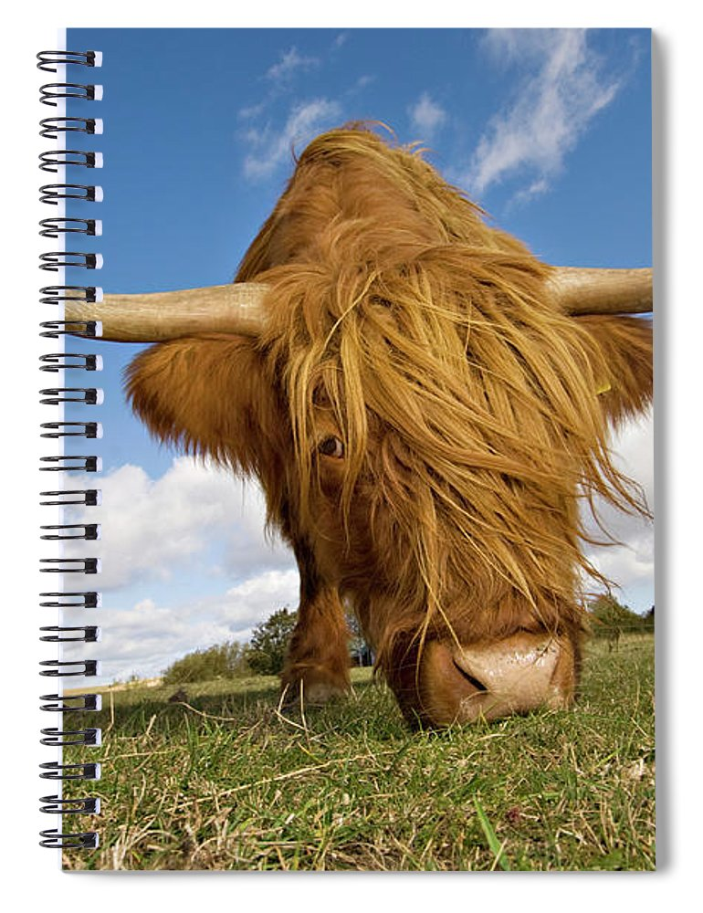Horned Spiral Notebook featuring the photograph Hairy, Horned, Highland Cow Grazing by Clarkandcompany
