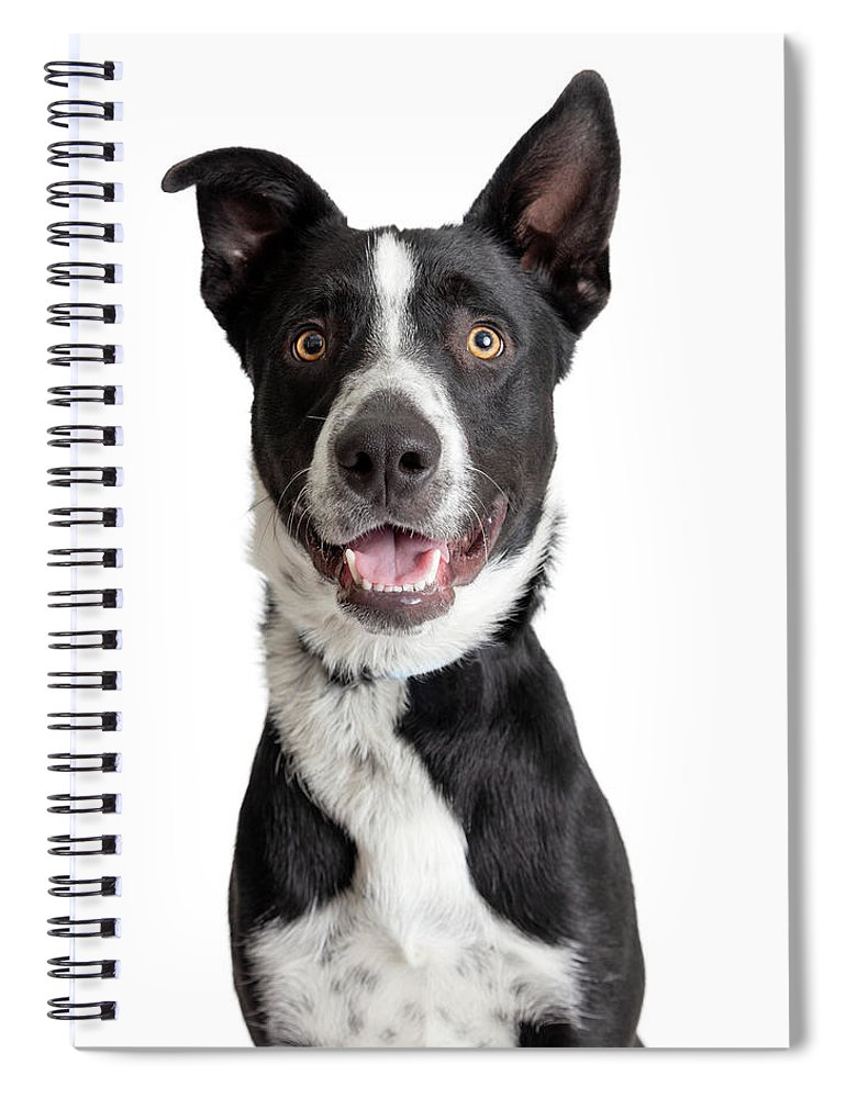 Canine Spiral Notebook featuring the photograph Happy Smiling Border Collie Crossbreed Dog Closeup by Susan Schmitz