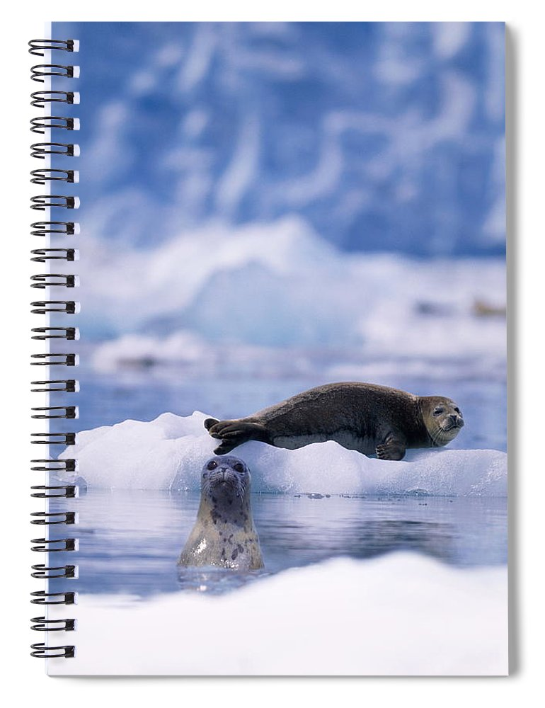 Animal Themes Spiral Notebook featuring the photograph Harbor Seal Phoca Vitulina In Glacial by Paul Souders