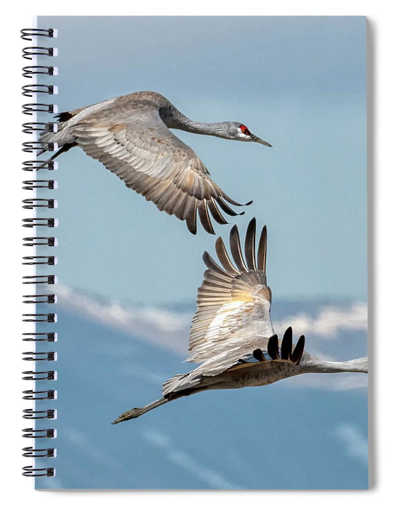 Cranes Spiral Notebook featuring the photograph Headed North by Mike Dawson