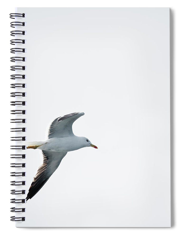 Sweden Spiral Notebook featuring the photograph Herring Gull In Flight by Magnusson, Roine