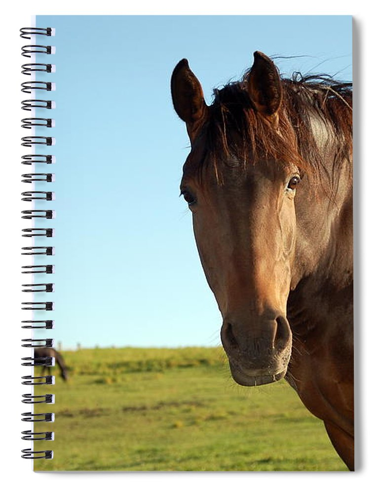 Horse Spiral Notebook featuring the photograph Horse by Esemelwe