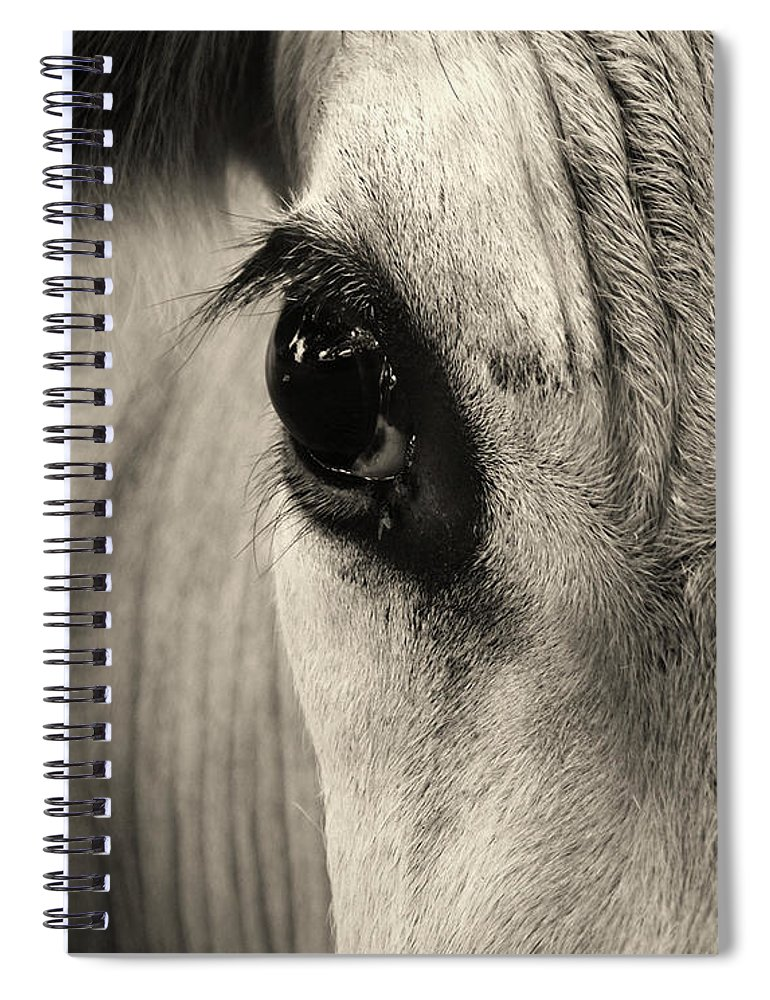 Horse Spiral Notebook featuring the photograph Horse Eye by Karena Goldfinch