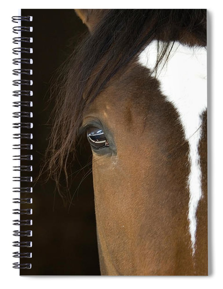 Horse Spiral Notebook featuring the photograph Horse Head by Rterry126