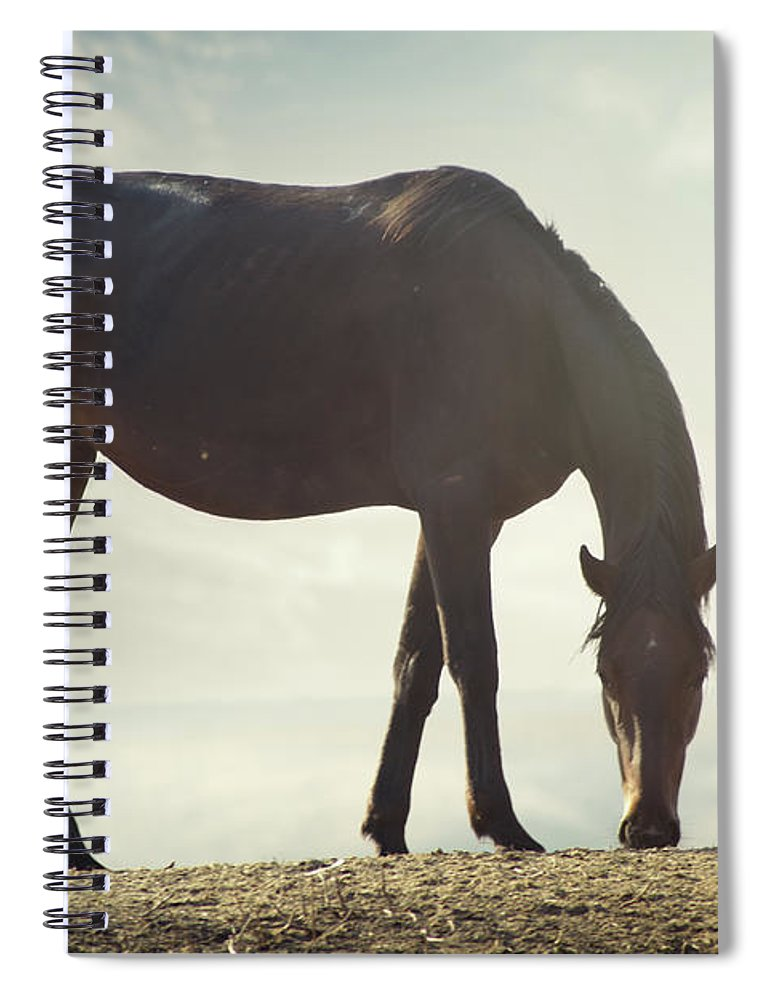 Horse Spiral Notebook featuring the photograph Horse In Wild by Arman Zhenikeyev - Professional Photographer From Kazakhstan