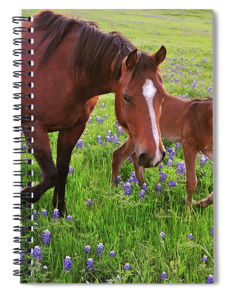 Horse Spiral Notebook featuring the photograph Horse On Bluebonnet Trail by David Hensley