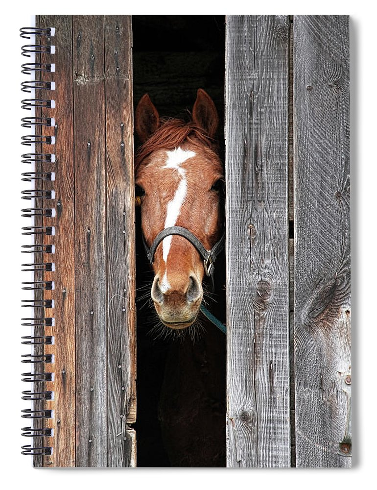 Horse Spiral Notebook featuring the photograph Horse Peeking Out Of The Barn Door by 2ndlookgraphics