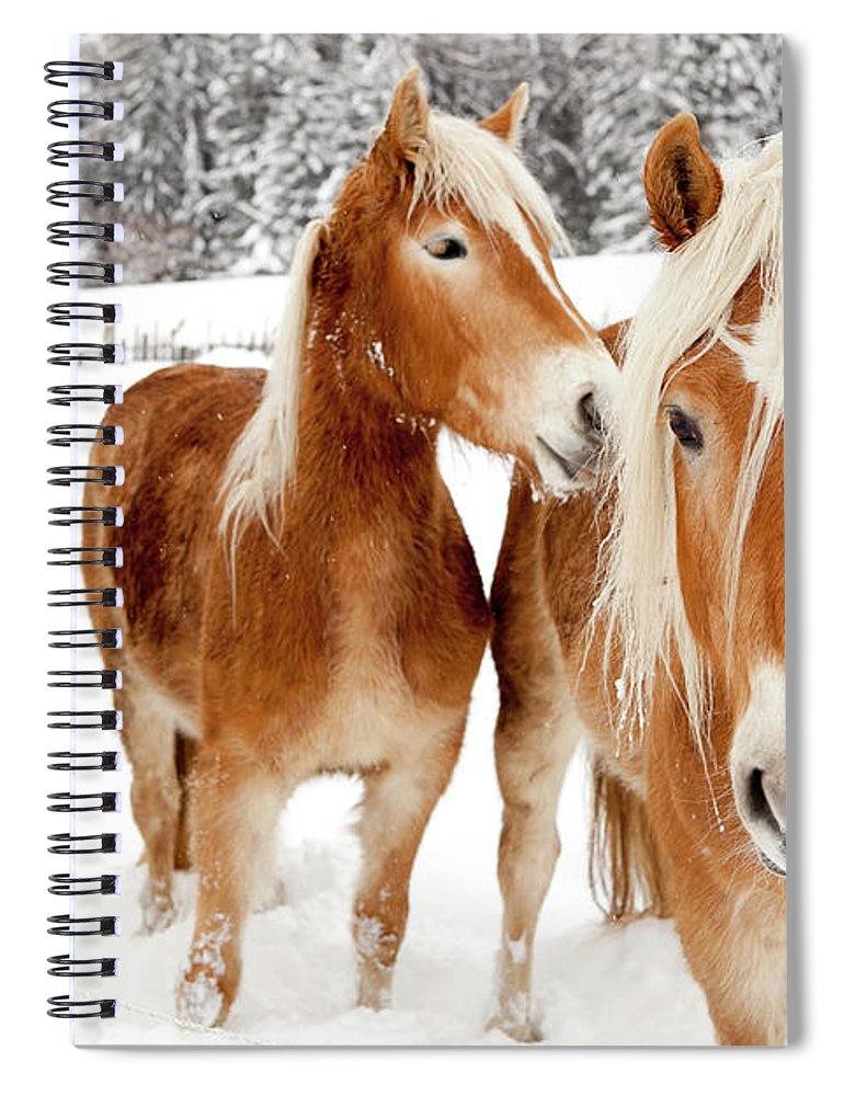 Horse Spiral Notebook featuring the photograph Horses In White Winter Landscape by Angiephotos