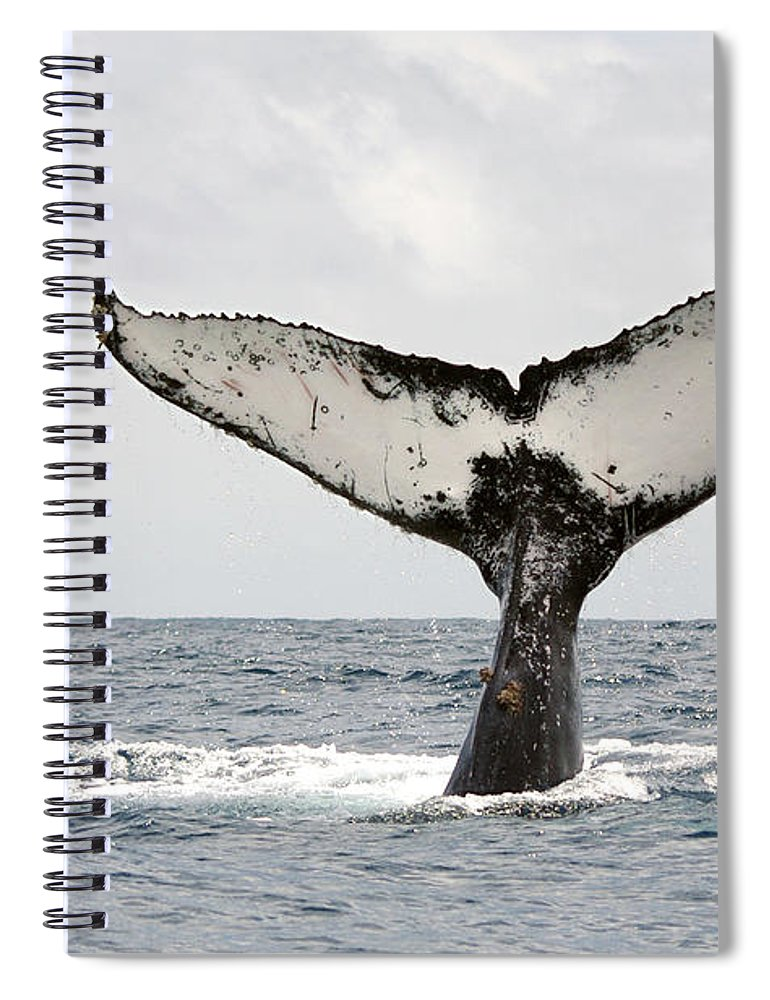 Animal Themes Spiral Notebook featuring the photograph Humpback Whale Tail by Photography By Jessie Reeder