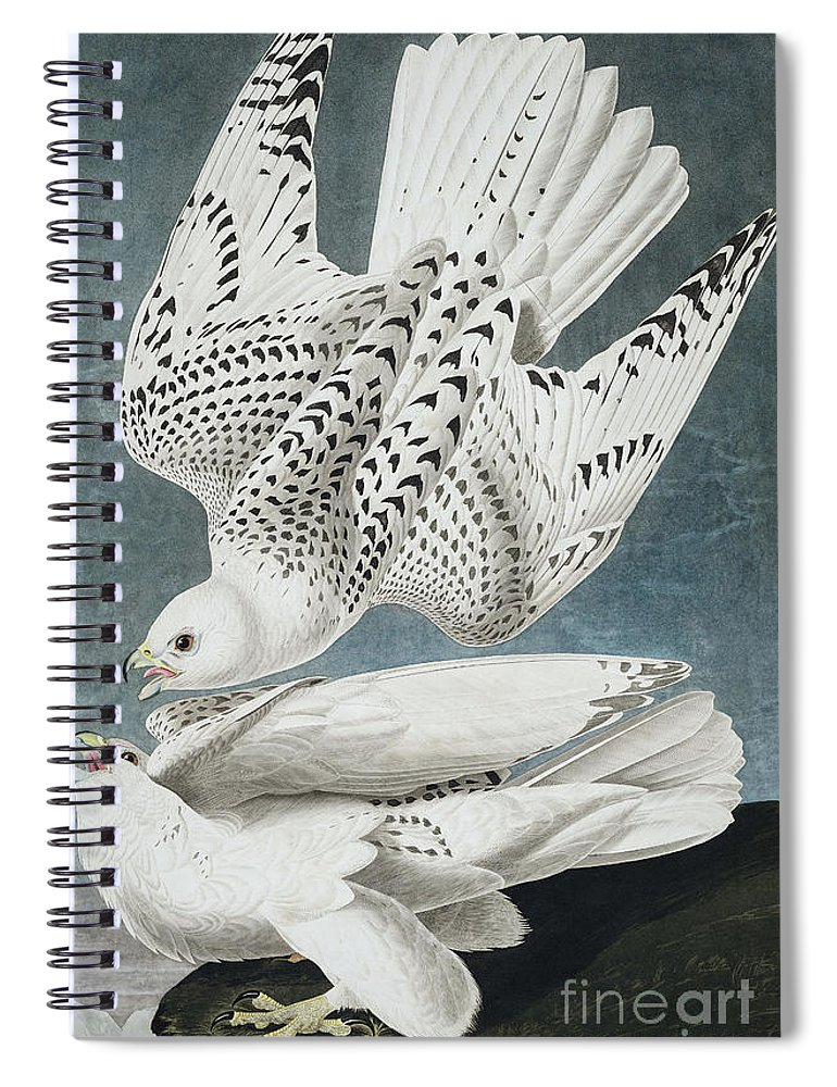 Blue Spiral Notebook featuring the painting Iceland Falcon Or Jer Falcon By Audubon by John James Audubon
