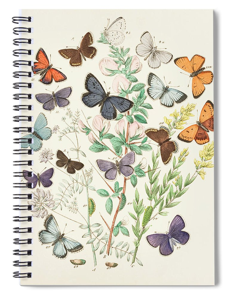Watercolor Painting Spiral Notebook featuring the digital art Illustration Of Butterflies And Green by Dorling Kindersley