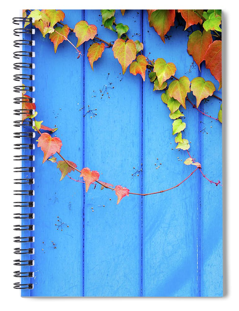 Architectural Feature Spiral Notebook featuring the photograph Ivy On The Door by Zianlob