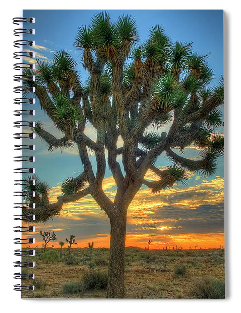Scenics Spiral Notebook featuring the photograph Joshua Tree At Sunrise by Photograph By Kyle Hammons