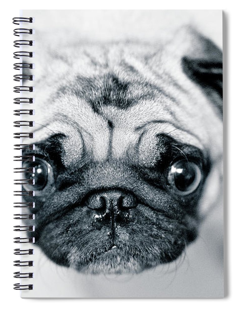 Pets Spiral Notebook featuring the photograph Just Enough by Eddy Joaquim
