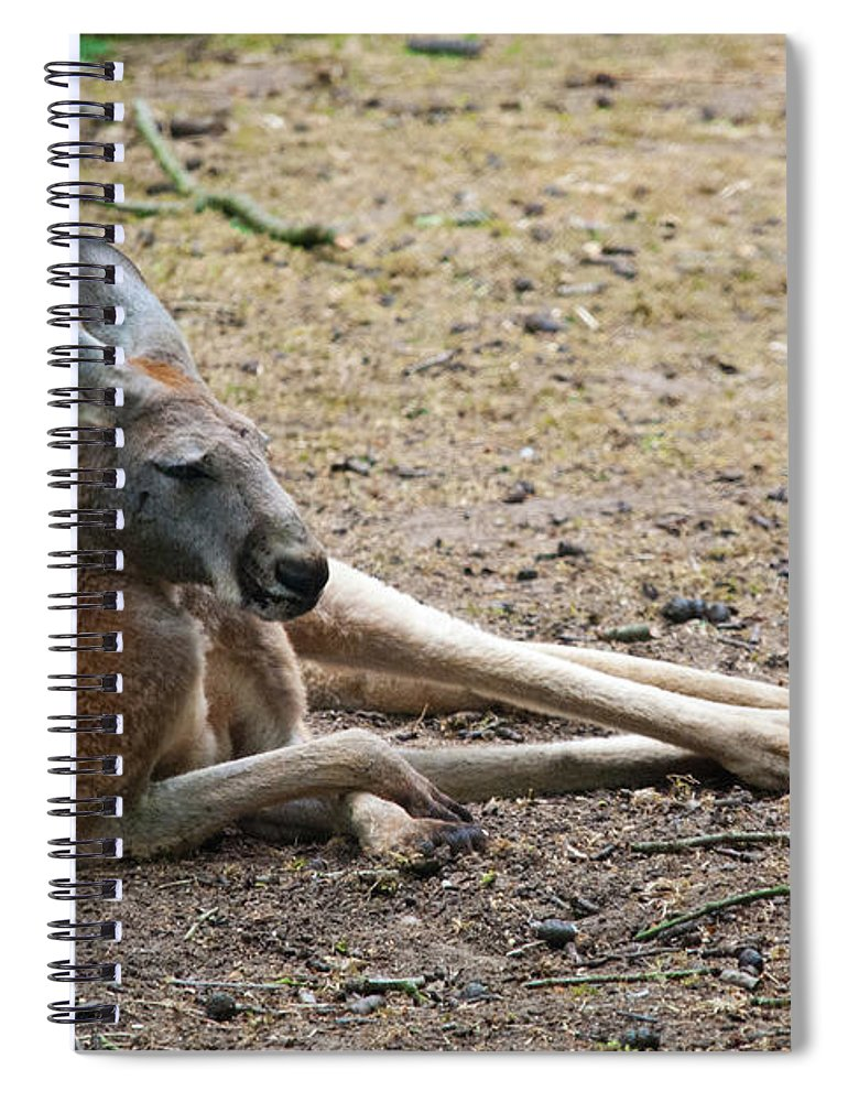 Animal Themes Spiral Notebook featuring the photograph Kangaroo by Elizabeth Livermore
