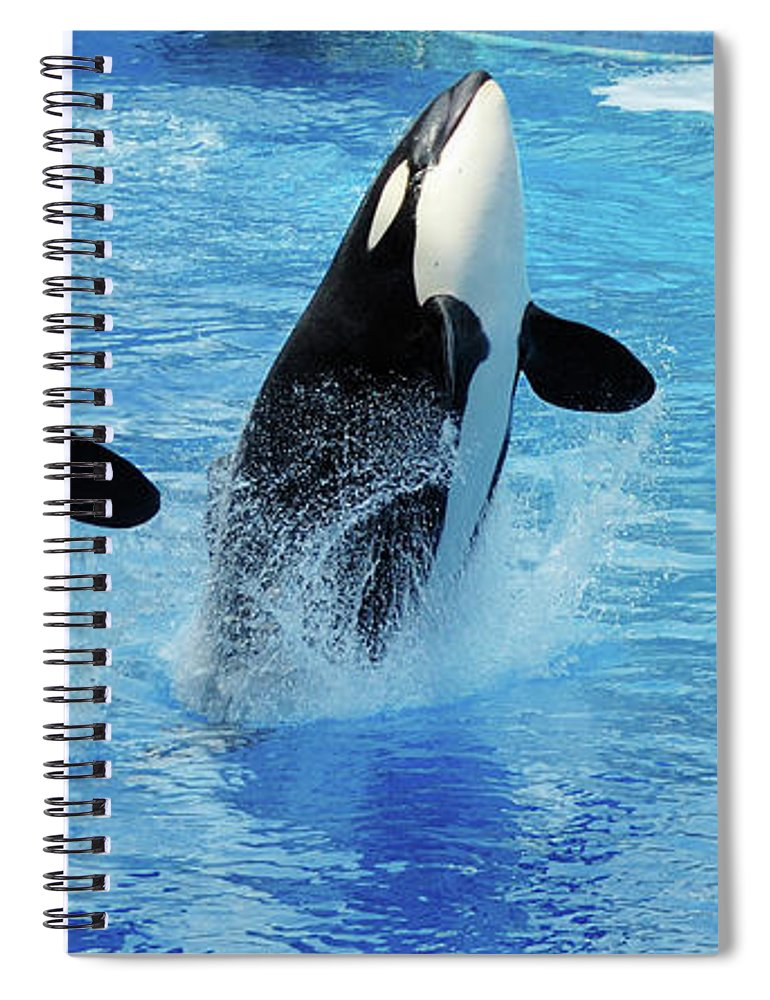 Panoramic Spiral Notebook featuring the photograph Killer Whale Family Jumping Out Of Water by Purdue9394