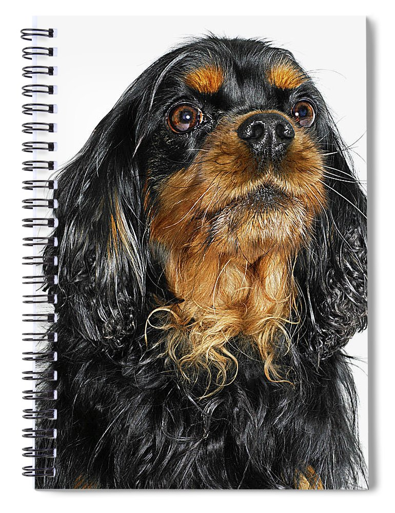Pets Spiral Notebook featuring the photograph King Charles Cavalier Portrait by Gandee Vasan