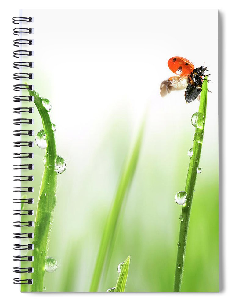 Hanging Spiral Notebook featuring the photograph Ladybug On Green Grass by Sbayram