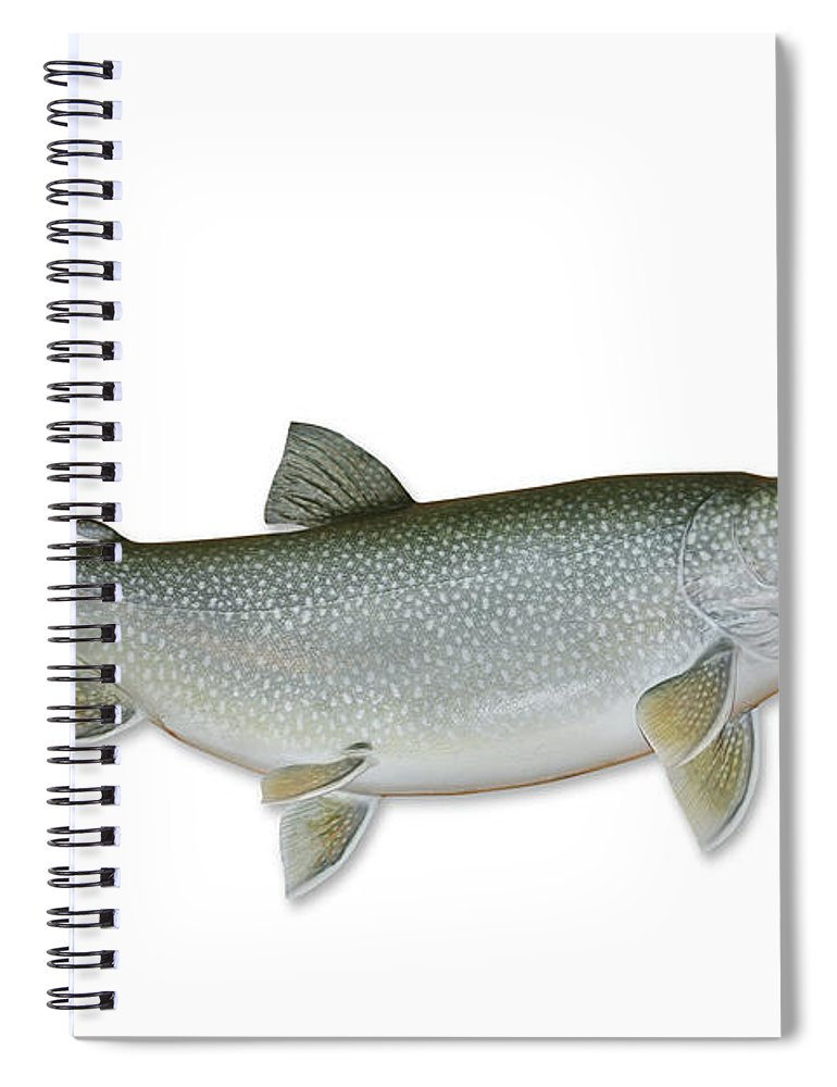 White Background Spiral Notebook featuring the photograph Lake Trout With Clipping Path by Georgepeters