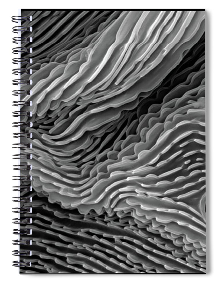Microscope Spiral Notebook featuring the photograph Lavender Leaf, Springtail, Sem by Sheri Neva