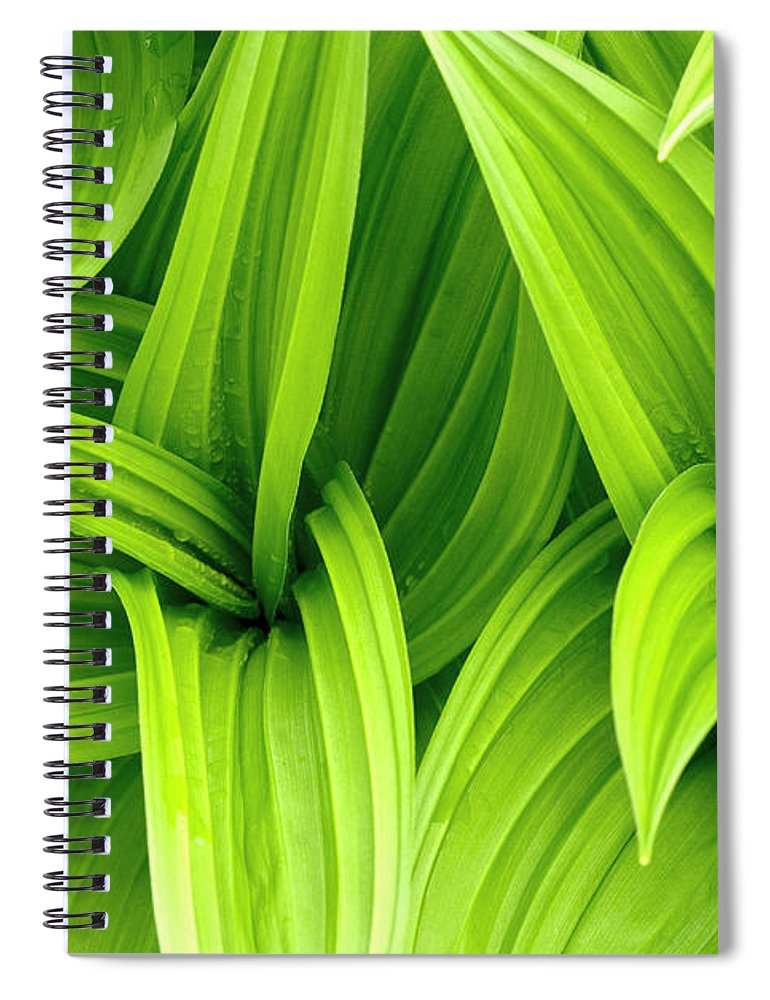 Grass Spiral Notebook featuring the photograph Leaves Drops Green by Vladimirovic