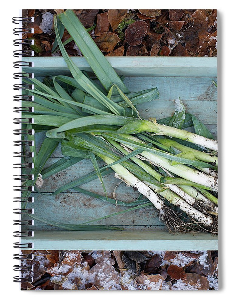 Outdoors Spiral Notebook featuring the photograph Leeks In Wooden Box On A Frosty Winter by Dougal Waters