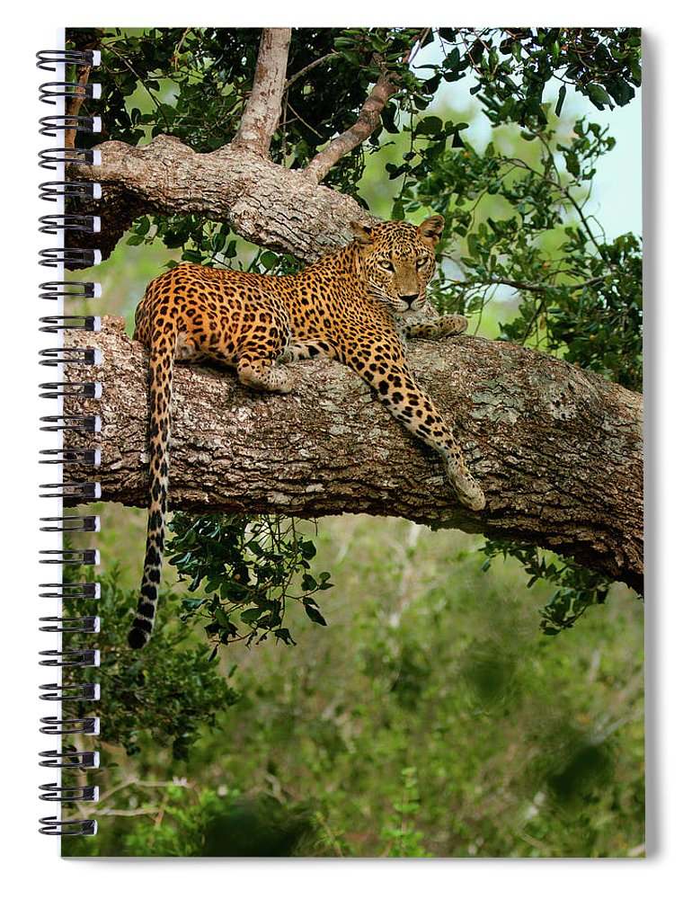Animal Themes Spiral Notebook featuring the photograph Leopard Sitting On A Branch by Thilanka Perera