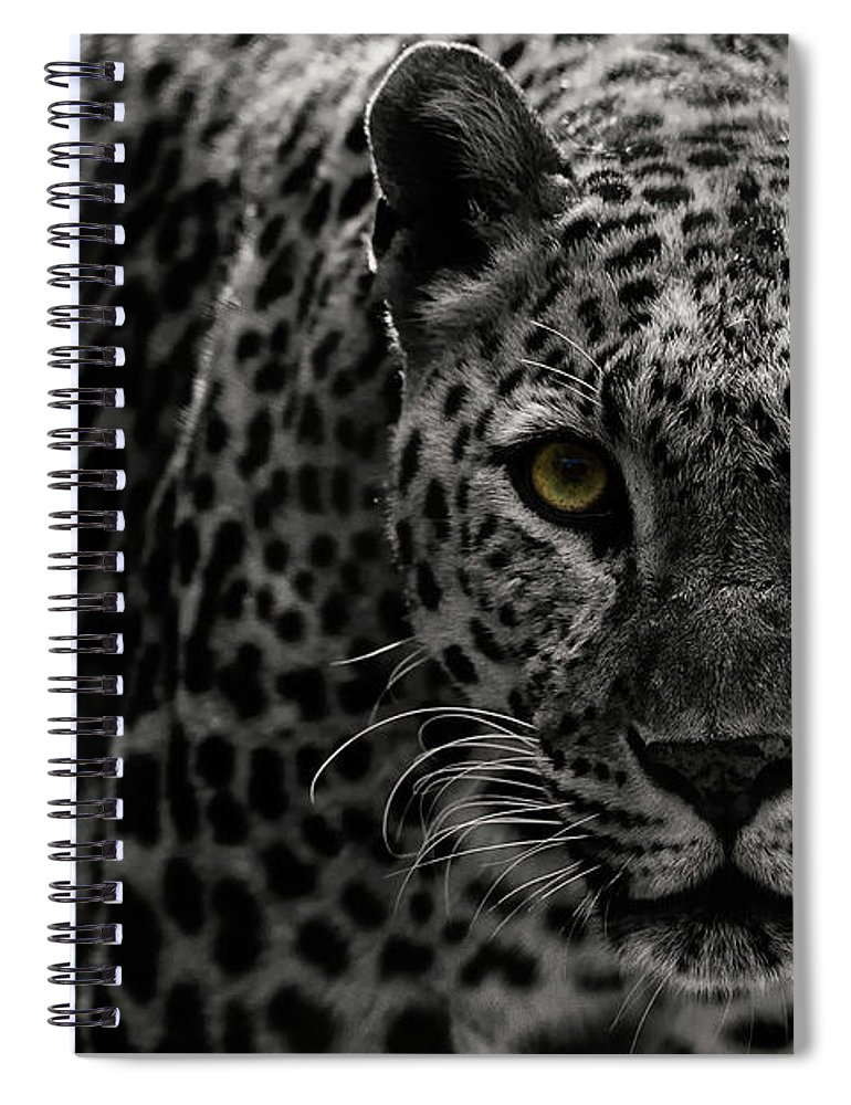 Big Cat Spiral Notebook featuring the photograph Leopard by Somak Pal