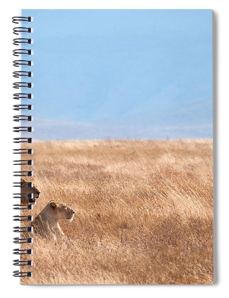 Scenics Spiral Notebook featuring the photograph Lion Couple In Ngorongoro Crater by Ceneri