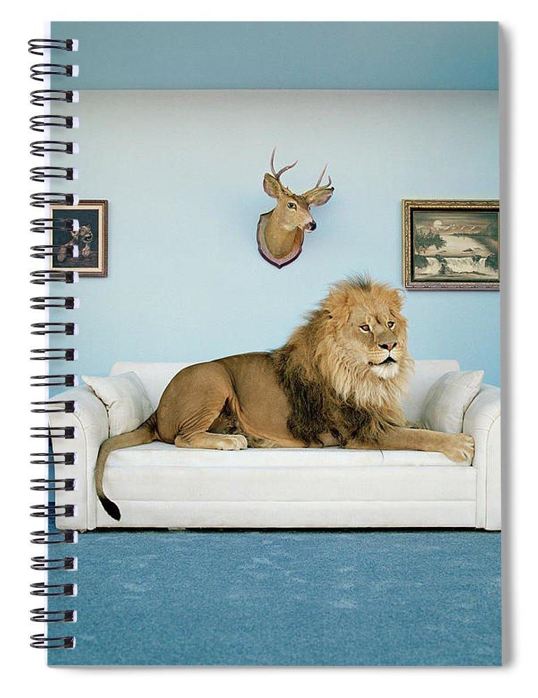 Pets Spiral Notebook featuring the photograph Lion Lying On Couch, Side View by Matthias Clamer