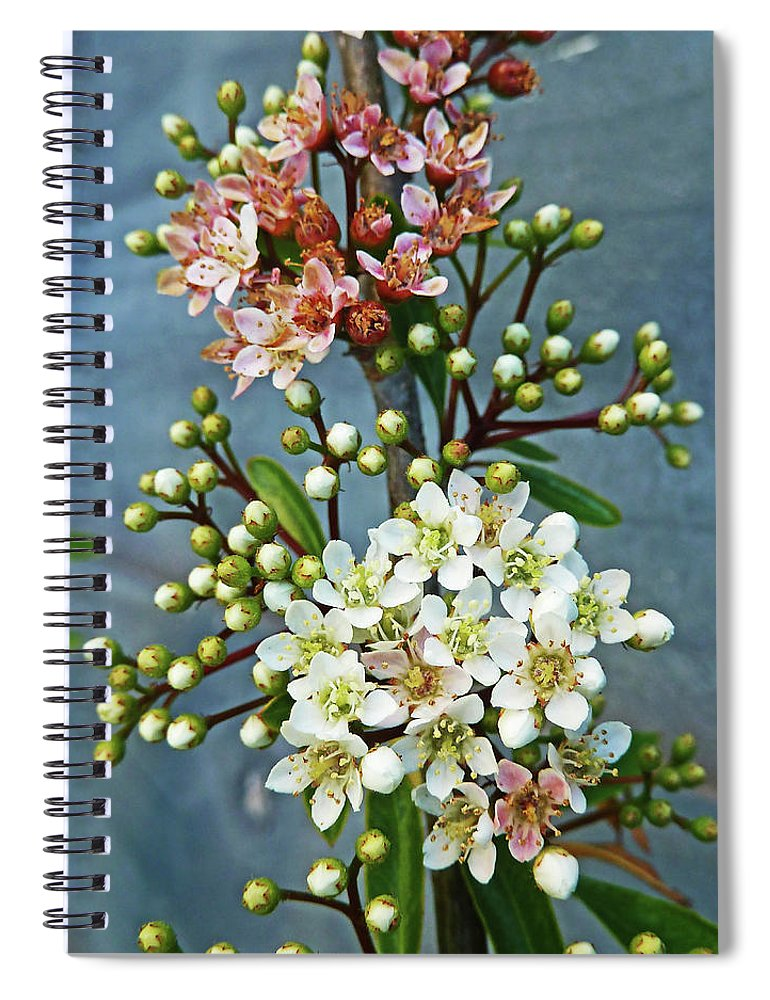 Bud Spiral Notebook featuring the photograph Little Star Like Buds by Steve Taylor Photography