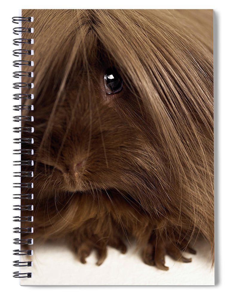 Pets Spiral Notebook featuring the photograph Long Haired Guinea Pig, Close-up by Michael Blann