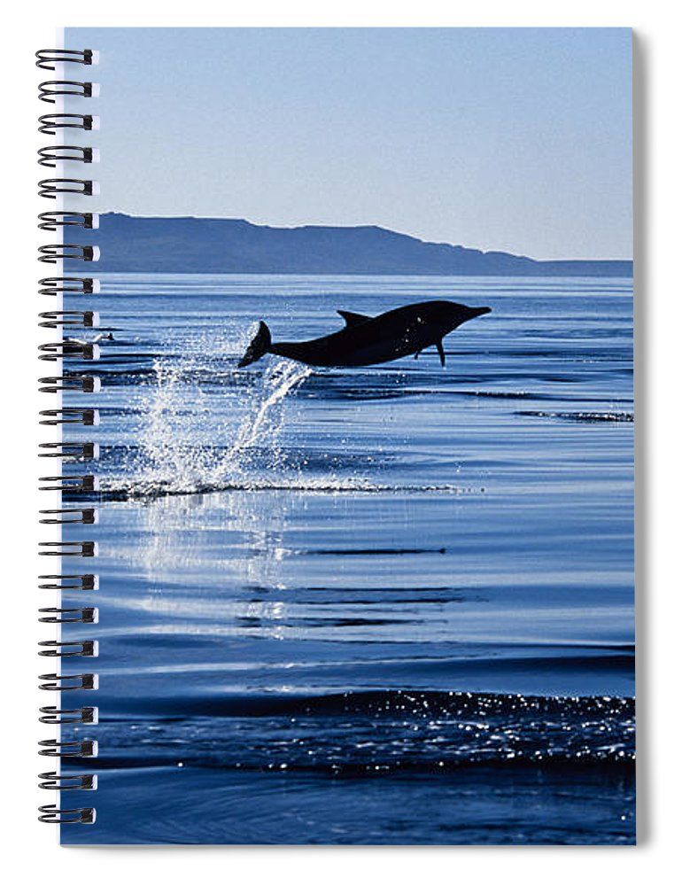 Latin America Spiral Notebook featuring the photograph Long-nosed Common Dolphin,delphinus by Gerard Soury