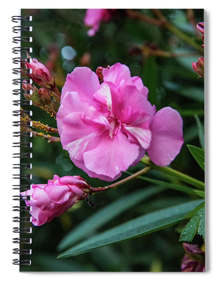 Dar Poeta Spiral Notebook featuring the photograph Lost In Janiculum by Joseph Yarbrough