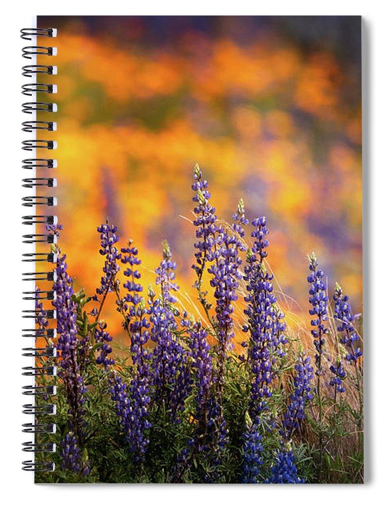 Arizona Spiral Notebook featuring the photograph Lupine Sunset by Saija Lehtonen