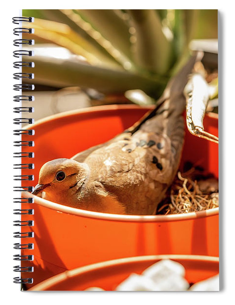 Pots Spiral Notebook featuring the photograph Made A Nest by Ric Schafer