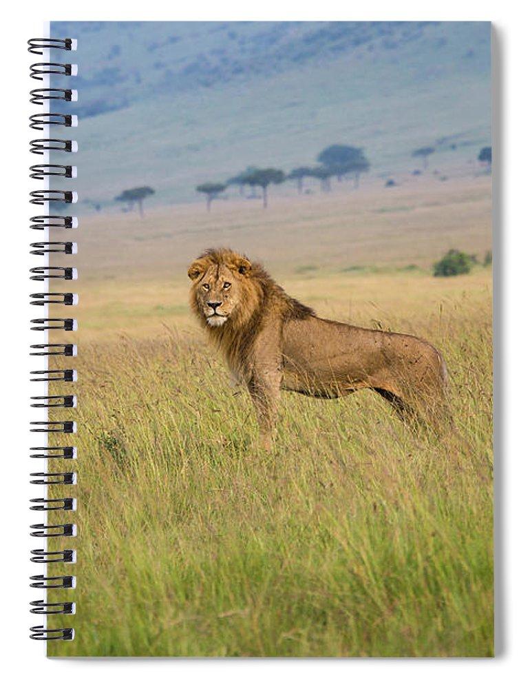 Kenya Spiral Notebook featuring the photograph Male Lion In The Savanna Masai Mara by Seppfriedhuber