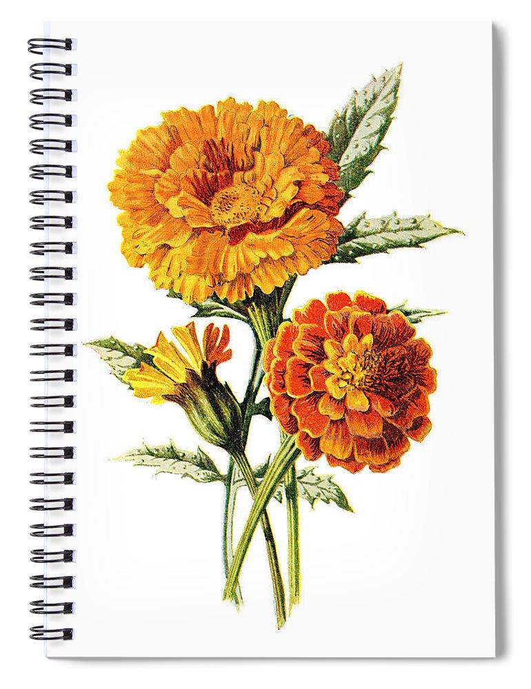 Jessamine Spiral Notebook featuring the mixed media Marigold Flower by Naxart Studio