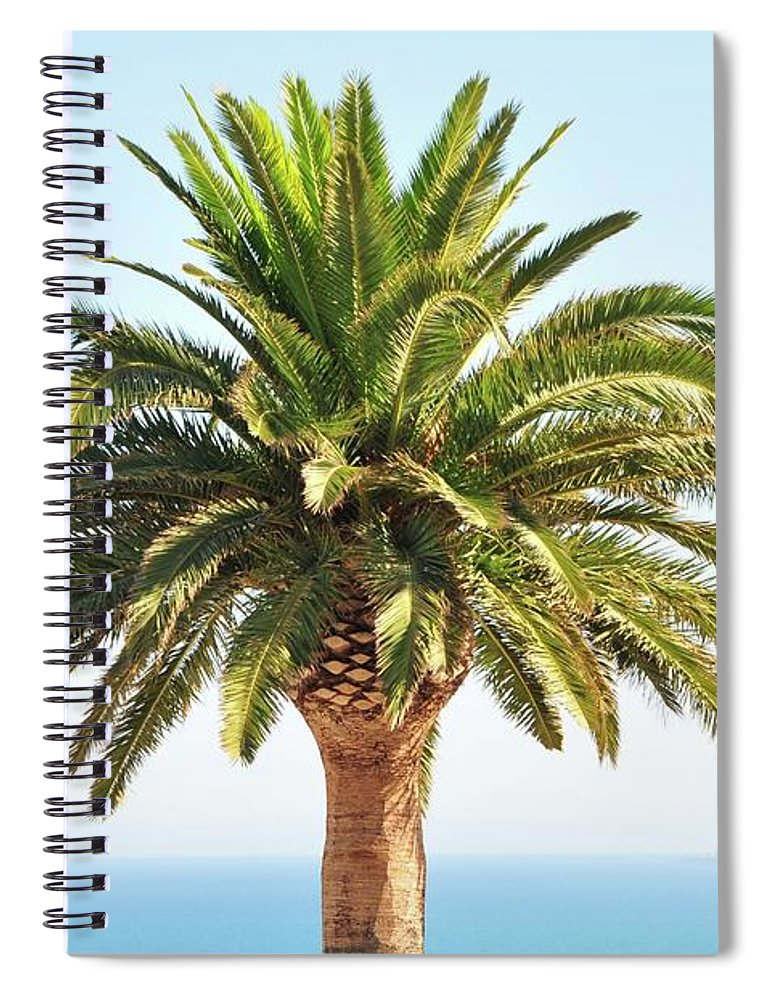Clear Sky Spiral Notebook featuring the photograph Mediterranean Palm Tree by Nicolas Emery