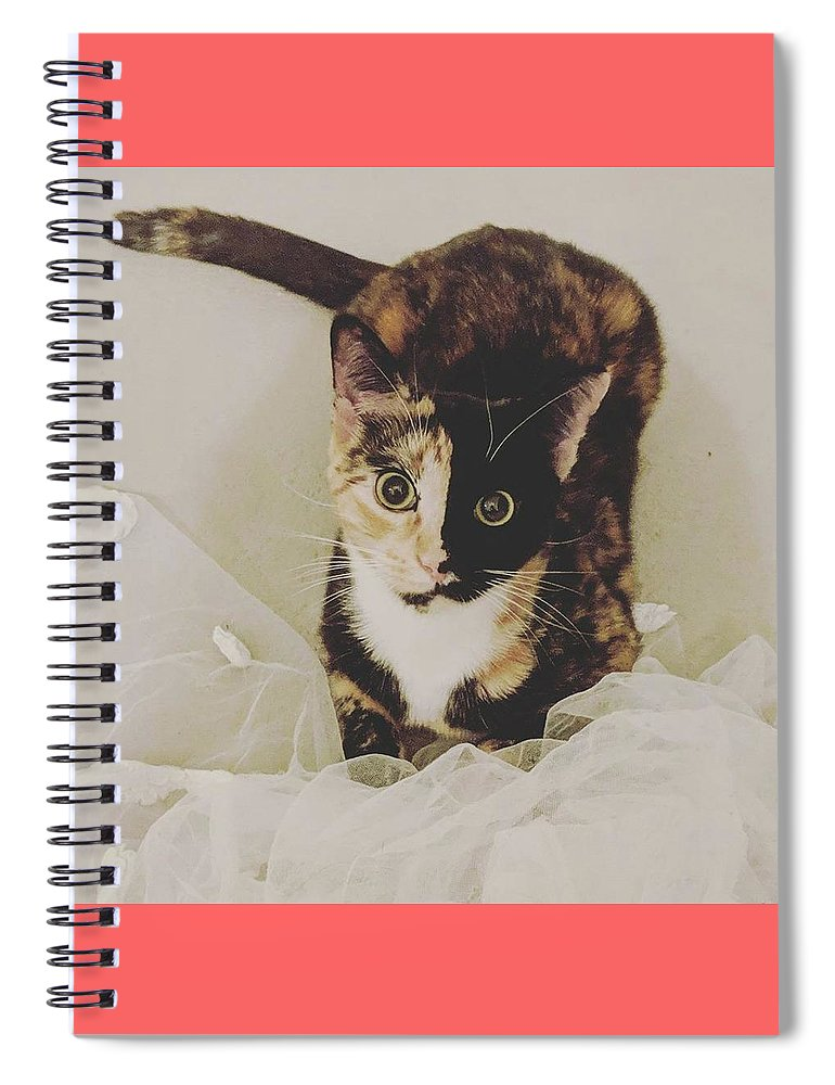 Cute Cat Spiral Notebook featuring the photograph Meet Star by Star And Ray