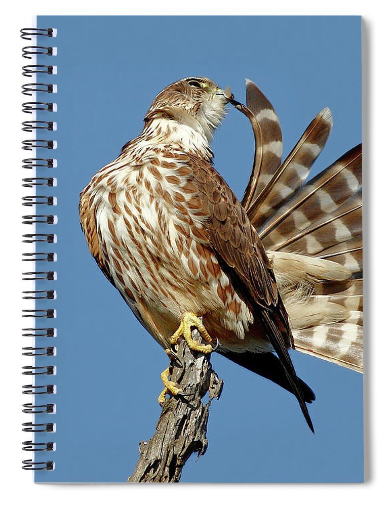 Animal Themes Spiral Notebook featuring the photograph Merlins Grooming Session by Bmse