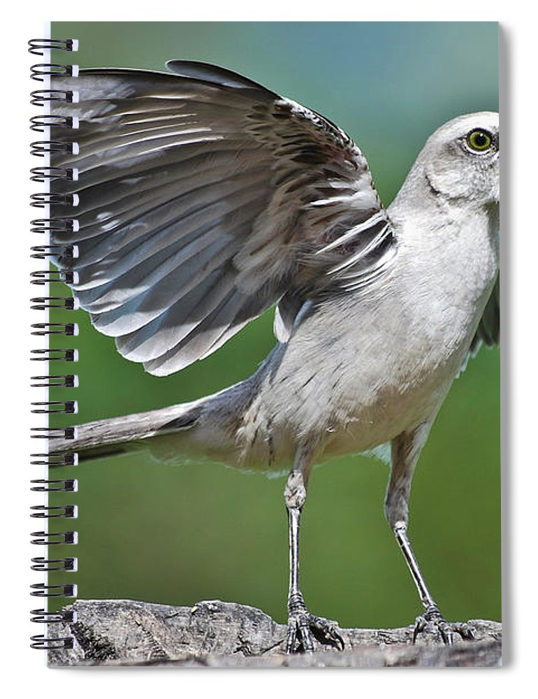 Animal Themes Spiral Notebook featuring the photograph Mimus Gilvus by Photo By Priscilla Burcher