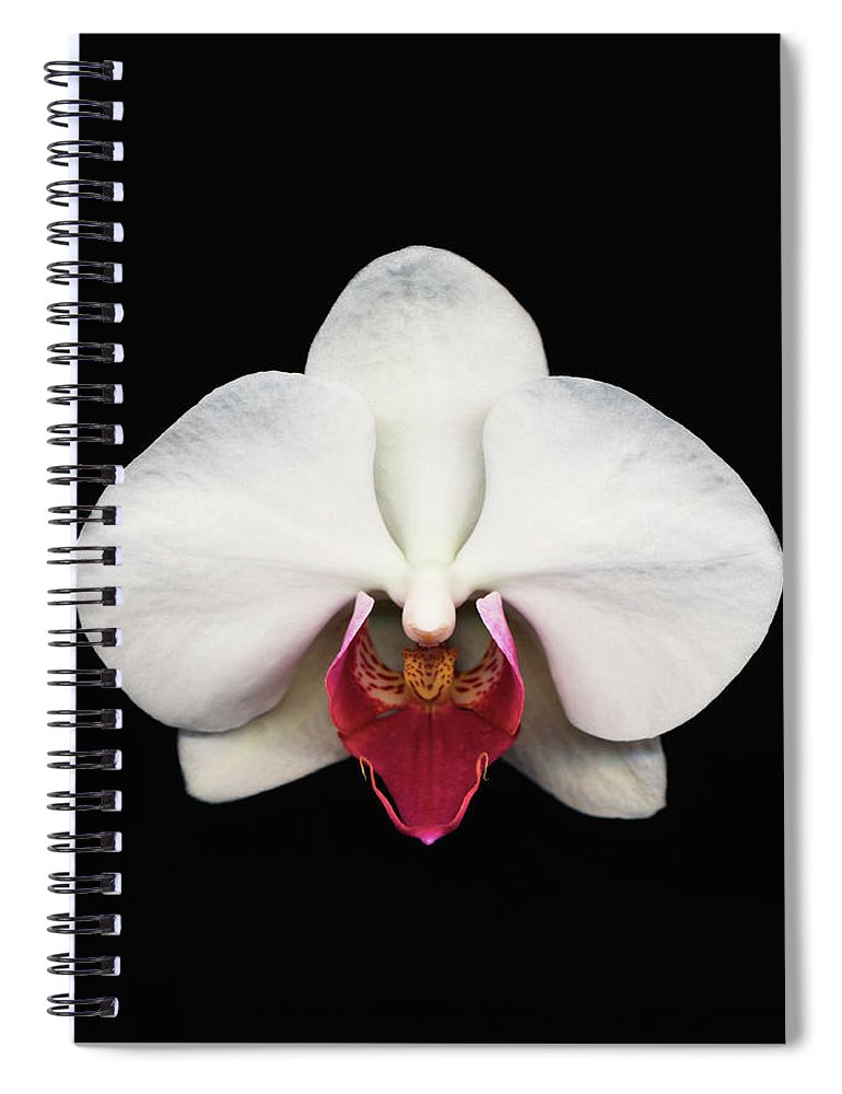 Black Background Spiral Notebook featuring the photograph Moth Orchid Against Black Background by Mike Hill