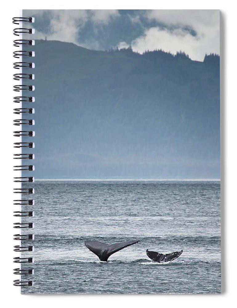 Water's Edge Spiral Notebook featuring the photograph Mother And Calf Whale Tails Megaptera by Blake Kent / Design Pics