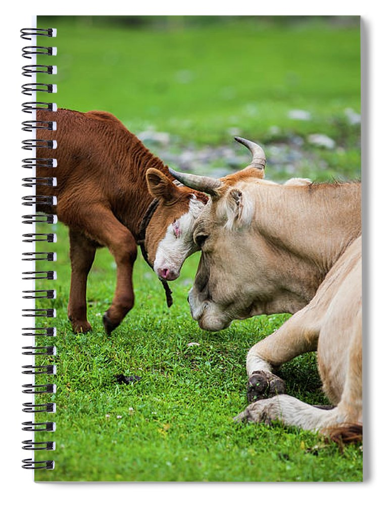 Grass Spiral Notebook featuring the photograph Mother And Son by Zhouyousifang