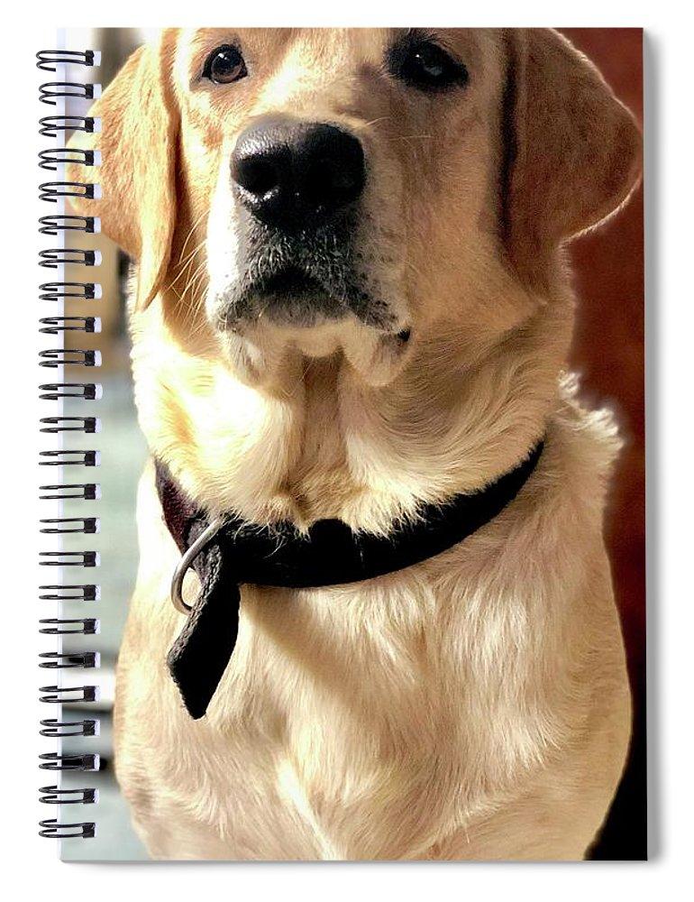 Labrador Dog Spiral Notebook featuring the photograph Labrador Dog by Arun Jain