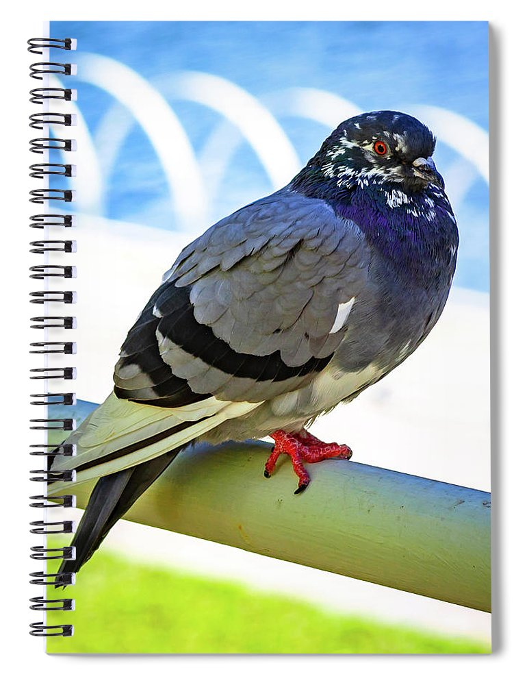 Pigeon Spiral Notebook featuring the photograph Mr. Pigeon by Borja Robles