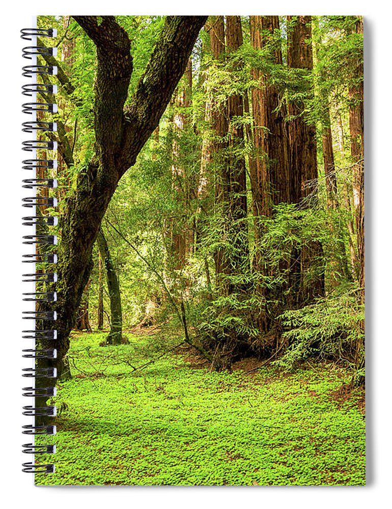 Tranquility Spiral Notebook featuring the photograph Muir Woods Forest by By Ryan Fernandez